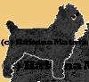HakunaMatata12 - Nagetierzüchter bei HamsterStory
