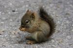 Fleur - Baumhörnchen (2 Monate)