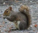Emily - Baumhörnchen (4 Monate)