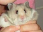 Fluffydumpling - (4 Monate)