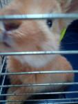 Ania - (5 Monate)