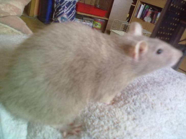 Schicka - (1 Jahr)