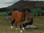 Joey War Horse - Männlich Pferd (2 Jahre)