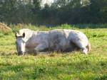 Derick - Männlich Pony (21 Jahre)